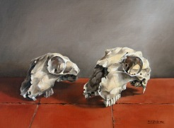 Sheep Skulls 2014 Oil on canvas 16 x 12 ins