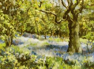 Bluebells, Helmeth Wood