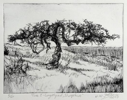 Tree 2 - Long Mynd, Shropshire